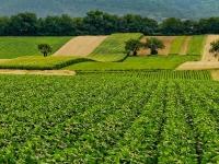 Agricoltura: esonero contributivo Covid-19, prime indicazioni